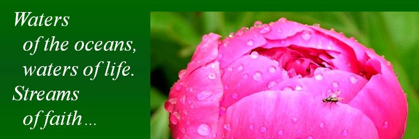 rain drops on pink flower photo by Michele Szekely